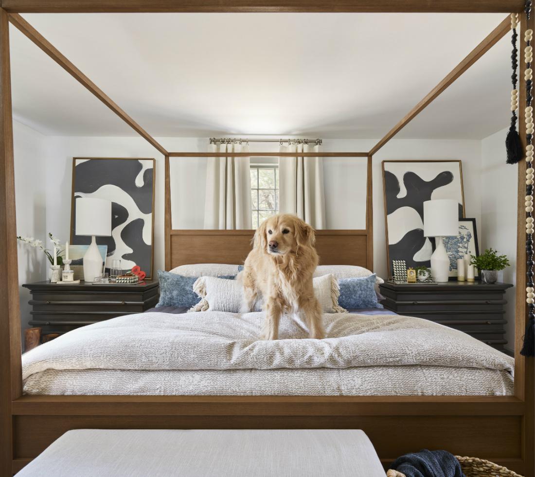 dog-on-bed-northshore-ma-interior-design